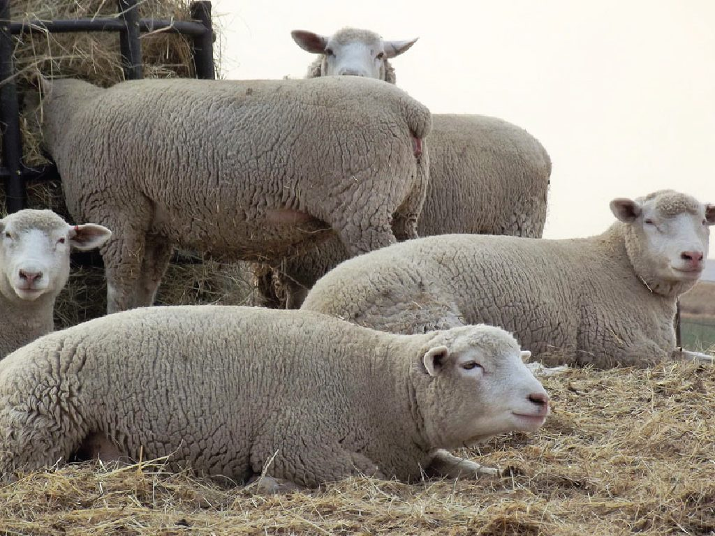 Sheep and Fiber Archives | Page 2 of 17 | BKB