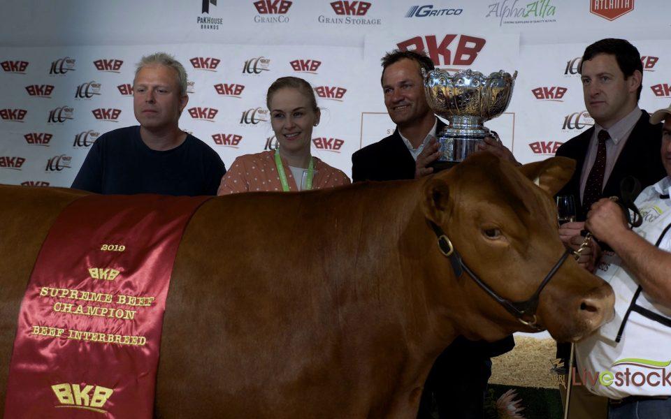 agri-expo-livestock-supreme-beef