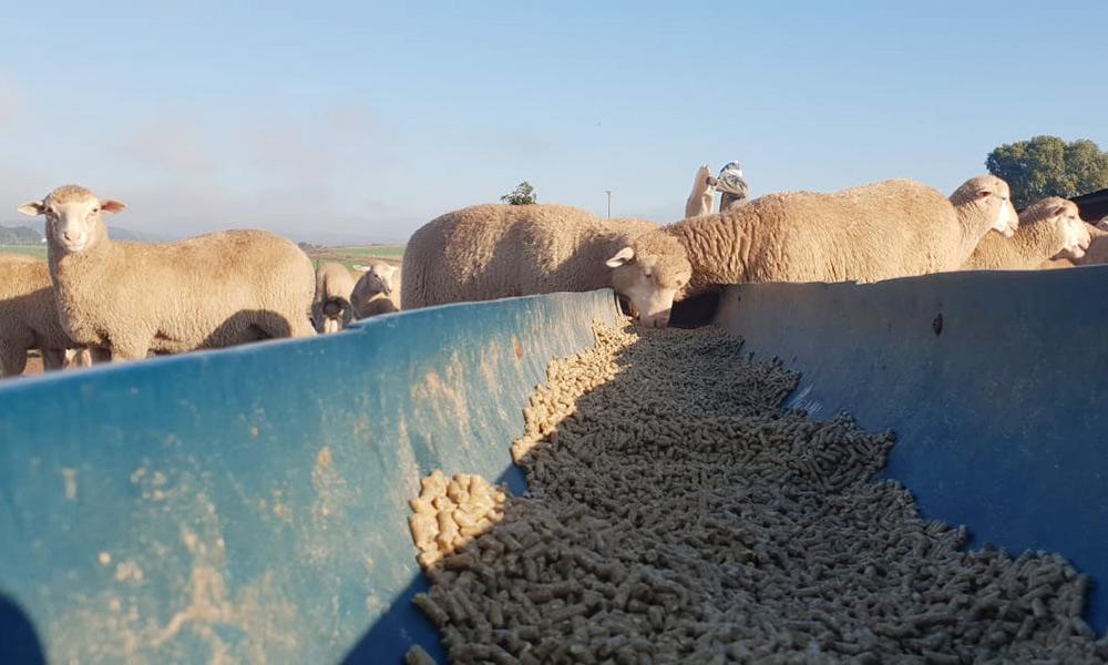 store-lamb-sale-report